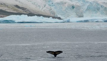 large_Antarctica__242_